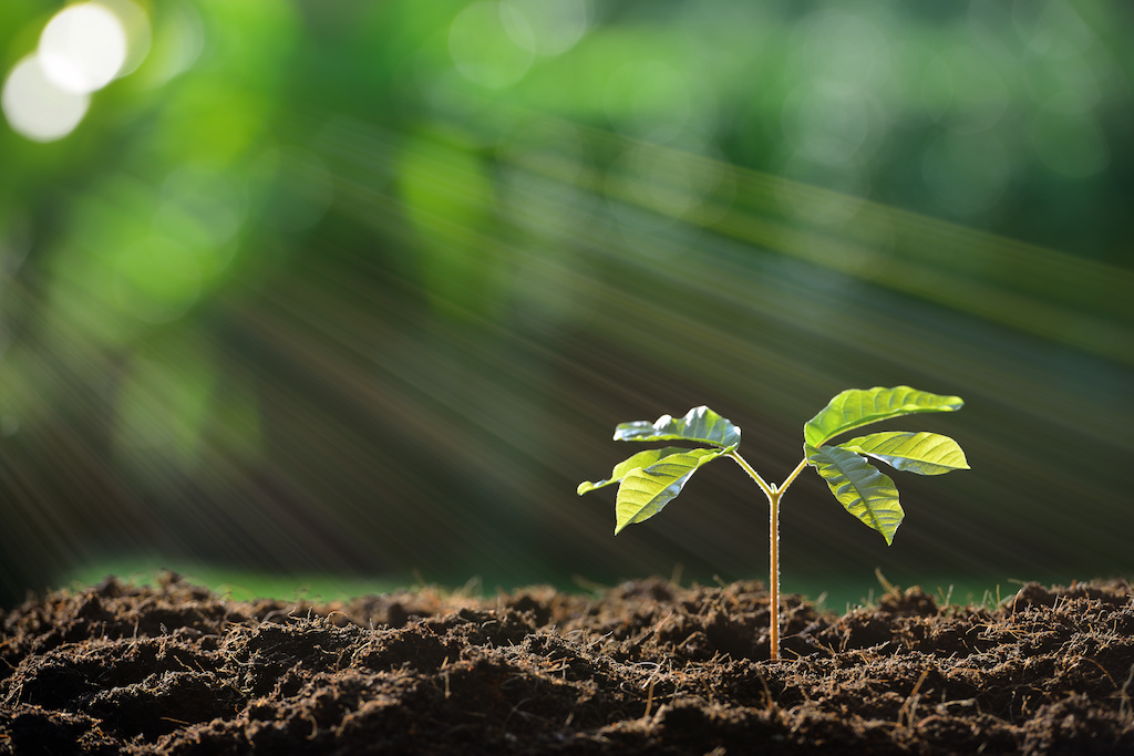 soil - ecology - micro-organisms - interconnectivity