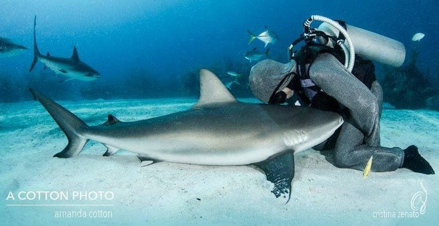 protecting sharks - organic media network - sharks - shark conservation - ocean health - animal protection - endangered species - shark