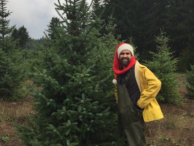 living christmas tree - christmas tree - eco christmas tree - green christmas tree - environmentally friendly christmas tree