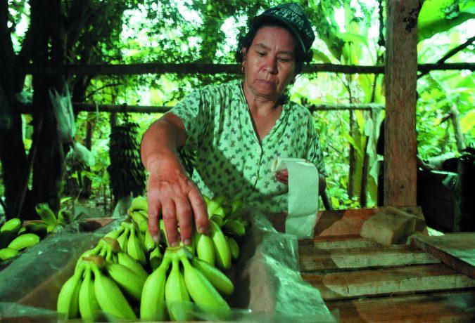 pesticides and bananas - organic media network - organic food - pesticides - organic bananas - equal exchange
