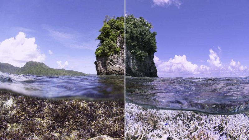 climate change - organic media network - chasing coral - oceans - coral reefs - netflix - documentary - environmental documentary - save our reefs - reefs