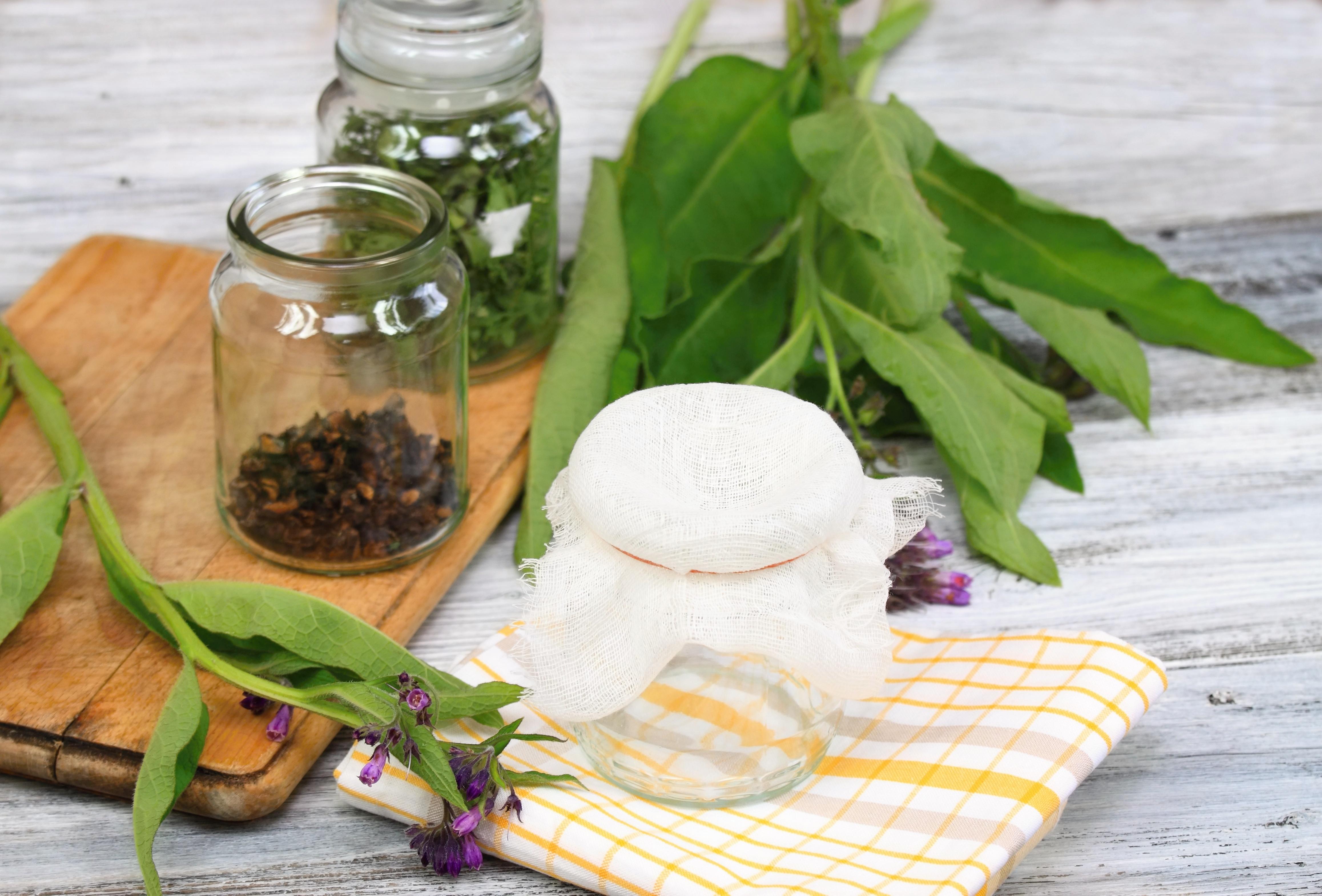comfrey - healing power of comfrey - medicinal plant comfrey - comfrey for broken bones - comfrey medicinal - comfrey plant - comfrey herb - comfrey medicine
