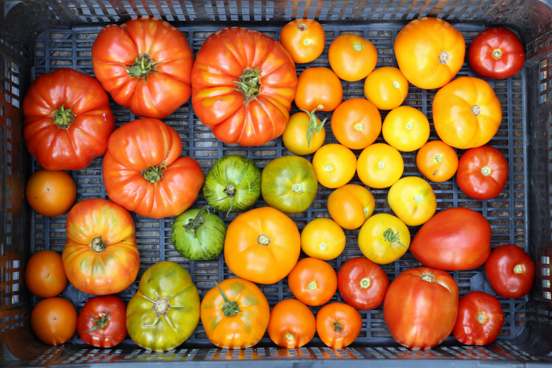 colorful tomatoes from the garden