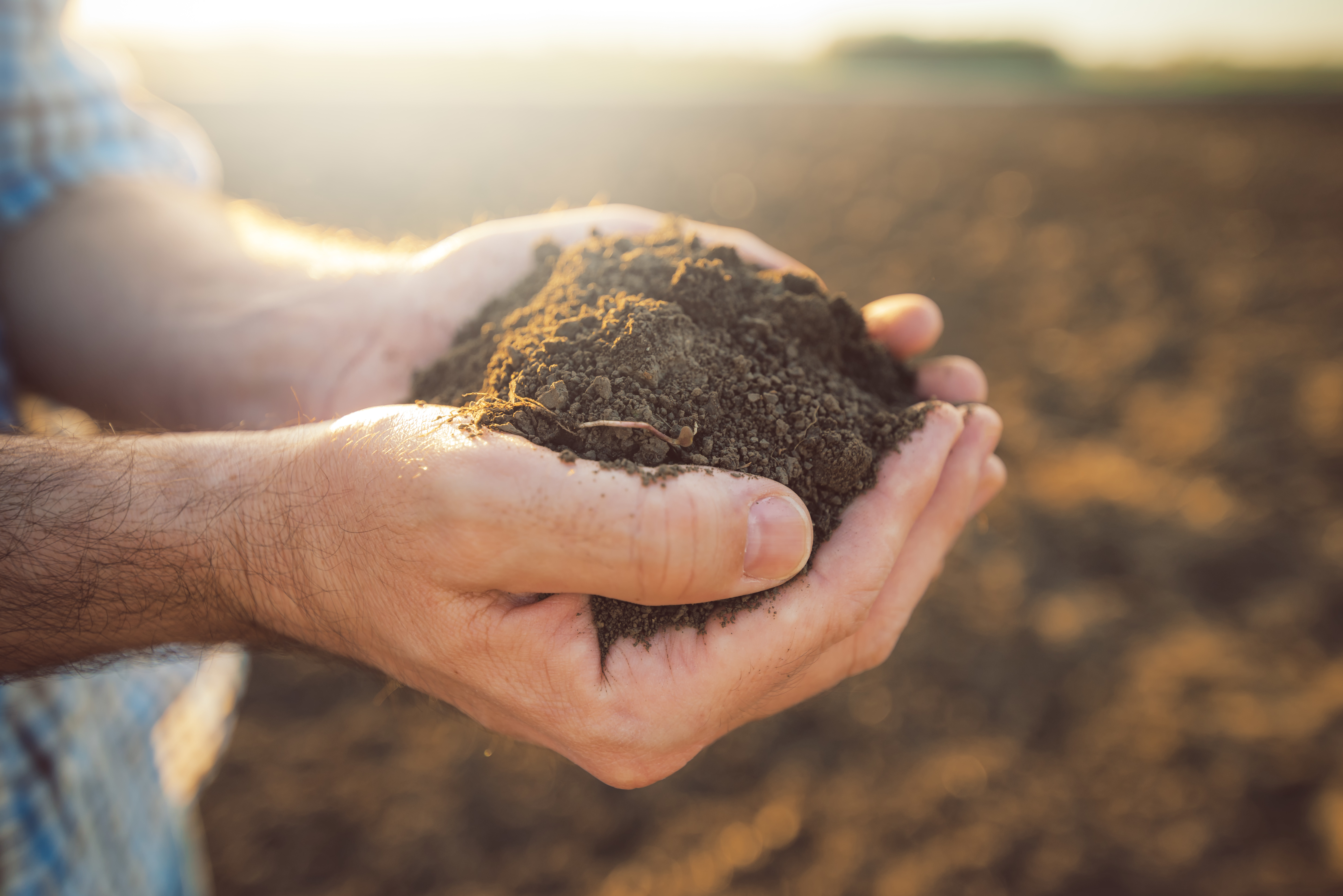 land and soil - widsom of nature - lessons from nature - lessons from soil - produce - health of soil