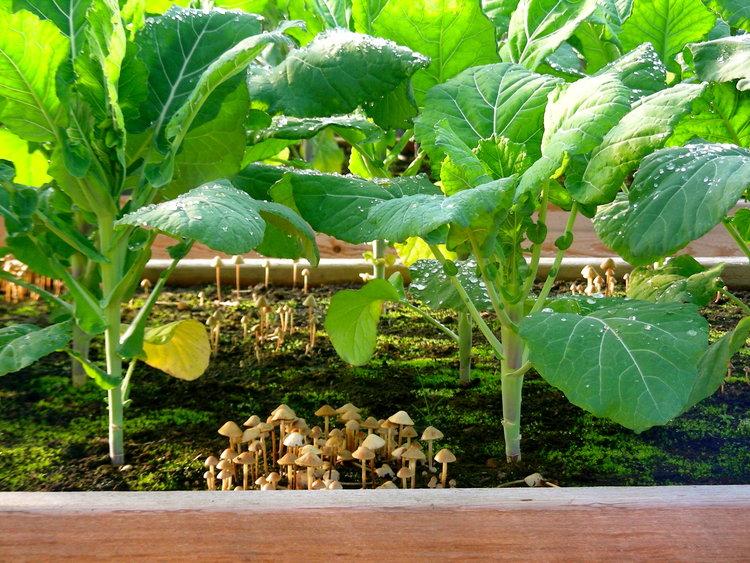 regenerative gardening - gardening - organic gardening - farming - carbon farming - soil health - an organic conversation - helgehellberg - education - inspiration - green living - green media